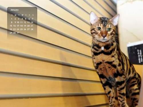 2012年1月份月曆-500.JPG