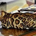 2012年2月份月曆-500.JPG