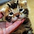 2012年3月份月曆-500