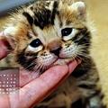 2012年3月份月曆
