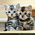 2012年4月份月曆-500