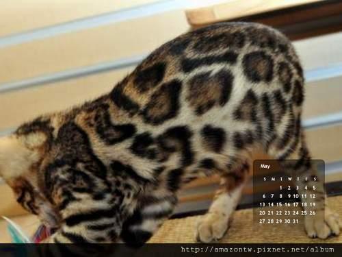 2012年5月份月曆-500