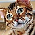 2012年6月份月曆