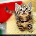 2012年12月份月曆
