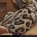 2013年2月份月曆-500