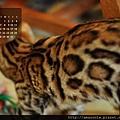 2013年5月份月曆