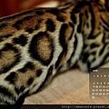 2013年6月份月曆