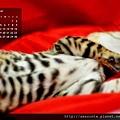 2013年11月份月曆-500.JPG