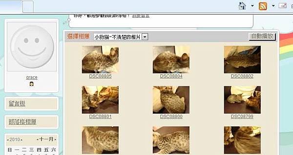 米克斯充當小豹貓販賣12.JPG