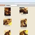 米克斯充當小豹貓販賣10.JPG