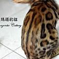20100530-織夢-0726.JPG