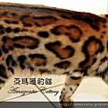 凱薩20110223-0070.JPG