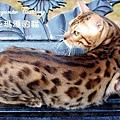 bingo20081227-88.JPG