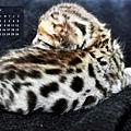 2011年2月份月曆-500.JPG