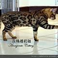 凱薩20110223-0069.JPG