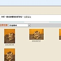 米克斯充當小豹貓販賣11.JPG