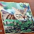 B003 小方巾.jpg