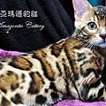 20100514-Famous-0548.JPG