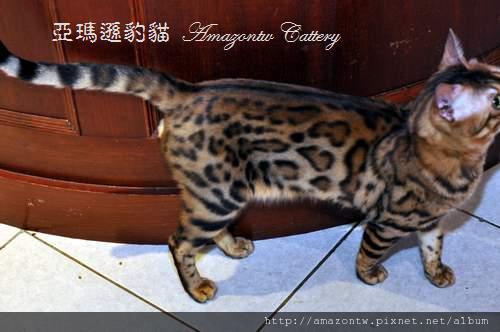 凱薩20110223-0032.JPG