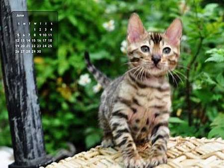 2011年6月份月曆-500.JPG