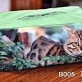 B005 面紙盒 綠 正面.jpg