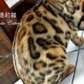 20100530-織夢-0761.JPG