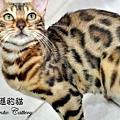 20100530-織夢-0679.JPG