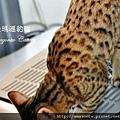奧莉薇20100906-0685.JPG