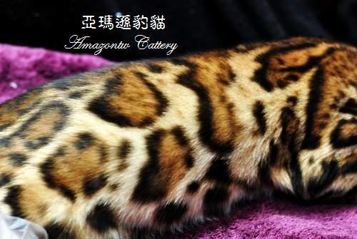 20100514-Famous-0542.JPG
