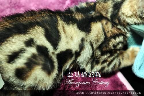 marble-female-0241.JPG
