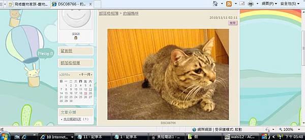 米克斯充當小豹貓販賣3.JPG