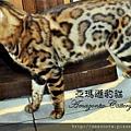 凱薩20110223-0056.JPG