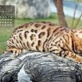 2011年1月份月曆-500.JPG