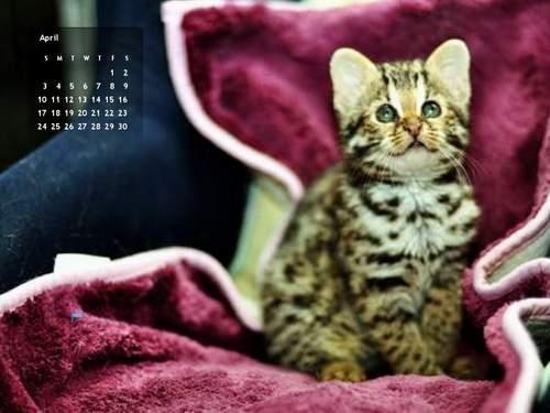 2011年4月份月曆-500.JPG