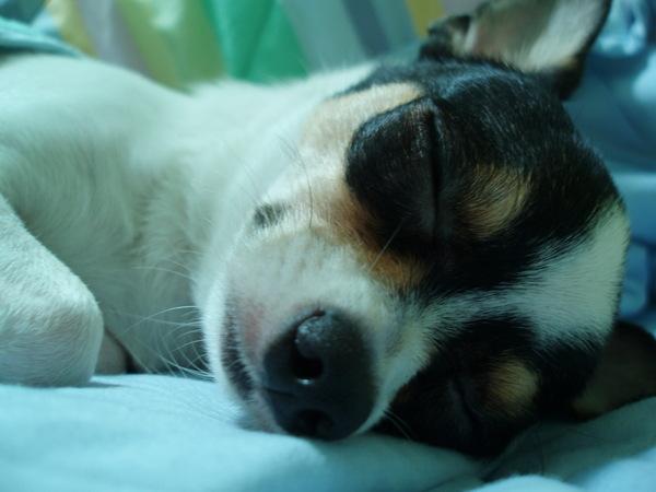 真的是一隻叫不醒的狗