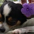 狗子26一隻花