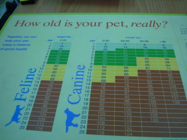 狗年齡計算表