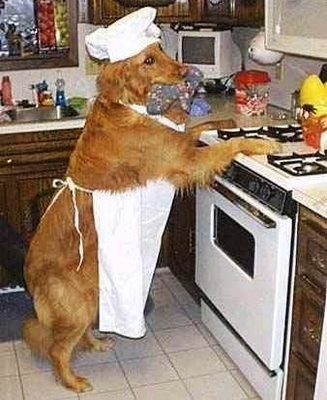 funny-dog-picture-dog-chef