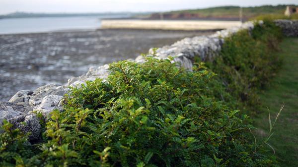 夏灧 邊邊的植物 很漂亮 綠的很直接 很率性
