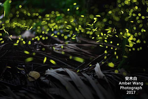 firefly-amberwang-20170501.jpg