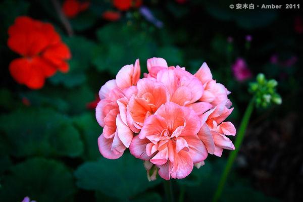 FB20110418_F010.jpg