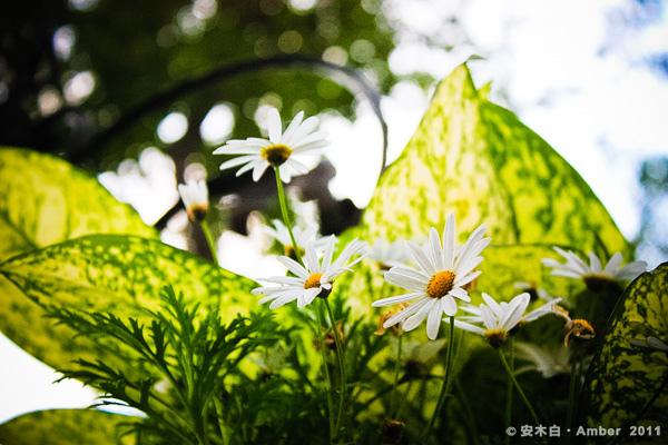 FB20110209_b04.jpg