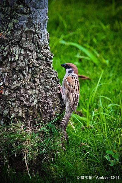 P20110527_Woodpecker.jpg