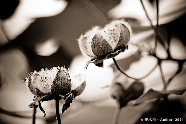 P20110301_f05.jpg