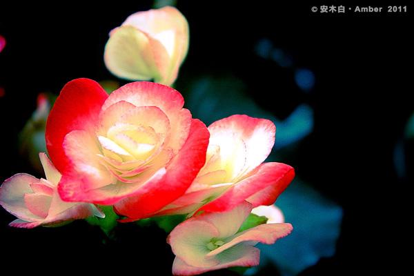 FB20110209_a005.jpg