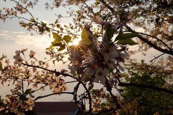 2013.03.24_[桃園復興]恩愛農場_咬一口就上癮的蜜蘋果-54