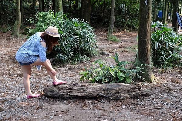 2013.07.27_竹子湖黑森林019.jpg