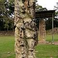Maya_Copan_(060121.2680).JPG