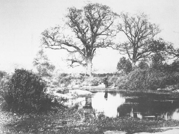 1870年,巴比松森林一隅.JPG