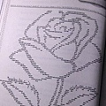 Illuminae_Rose_Sorry